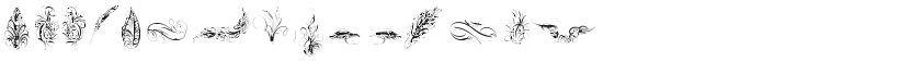 Penmanship Feathers的封面图